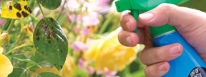 Insecticides + Fungicides